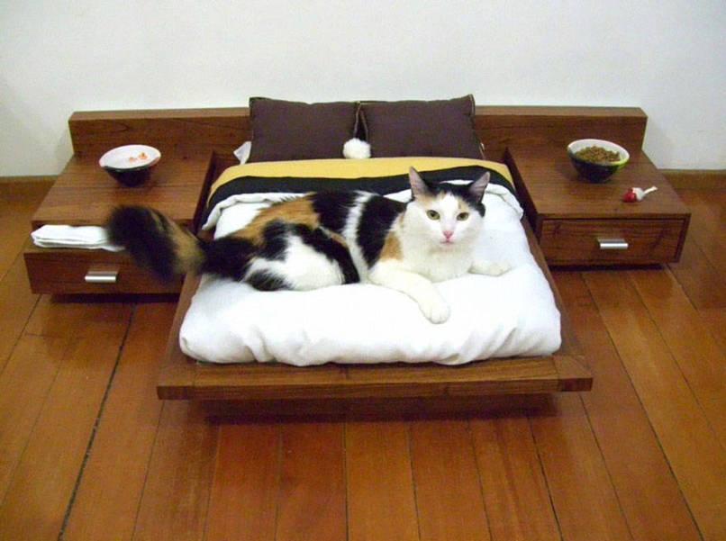 desugn meubels voor katten